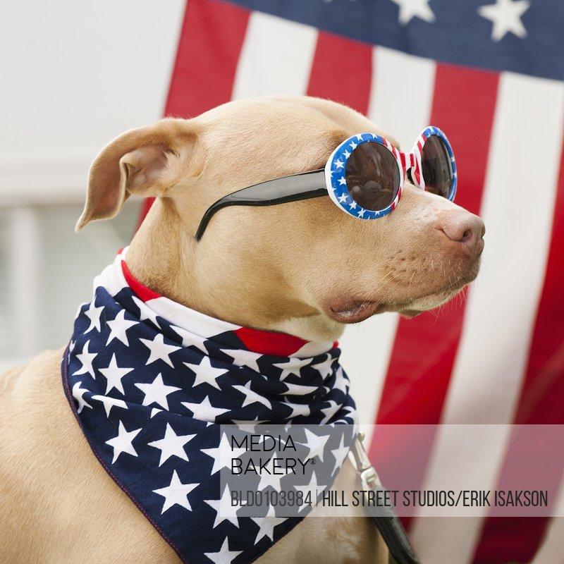 Dog american flag