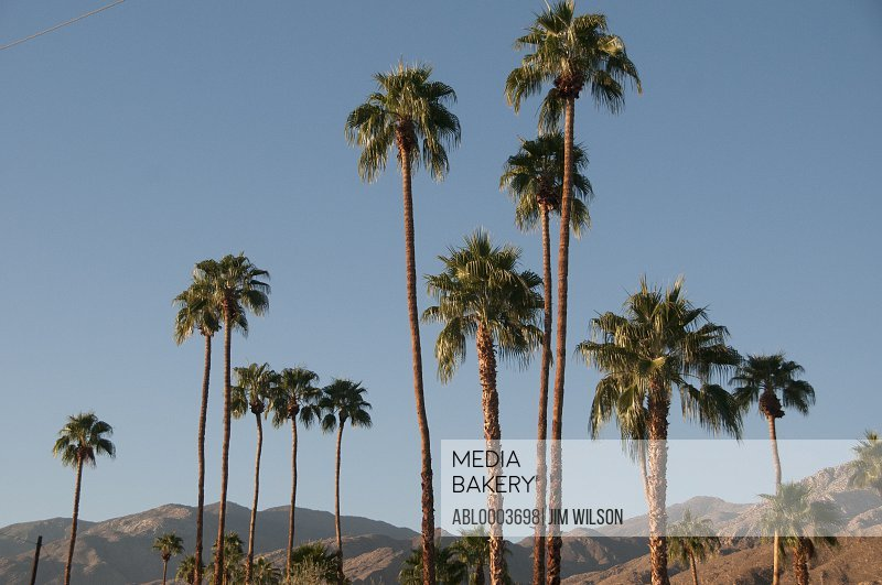 Palm Trees and Desert Mountains, Palm Springs, California, USA