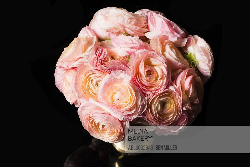 Close up of Bouquet of Pink Persian Buttercup Flowers