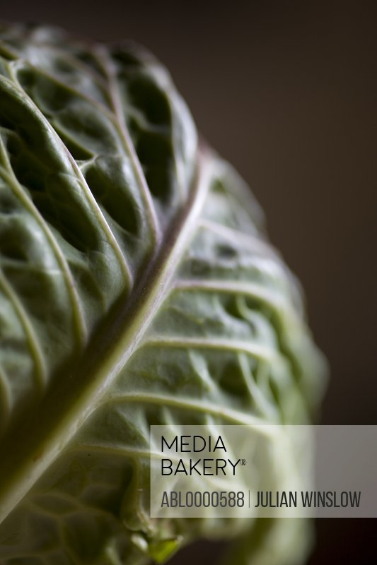 Extreme close up of cabbage