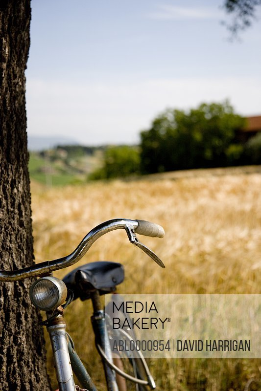 Bicycle leaning on a tree next to sunny wheat field