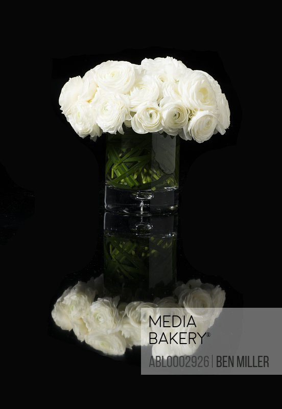 Bouquet of White Persian Buttercup Flowers in a Vase