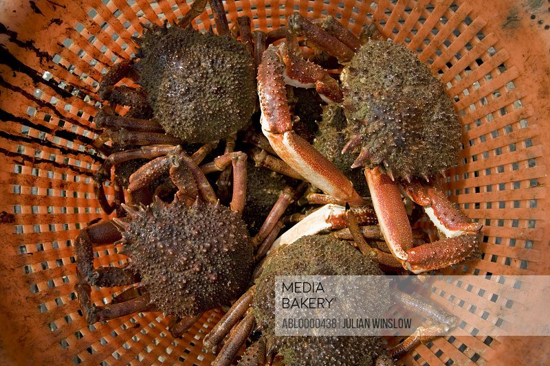 Close up of crabs in a basket