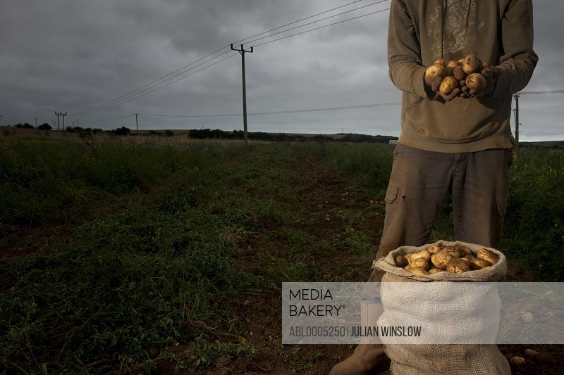 Farmer standing in a field holding potatoes in his hands