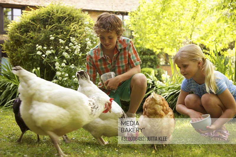 Boy and Girl Feeding Chickens in Garden