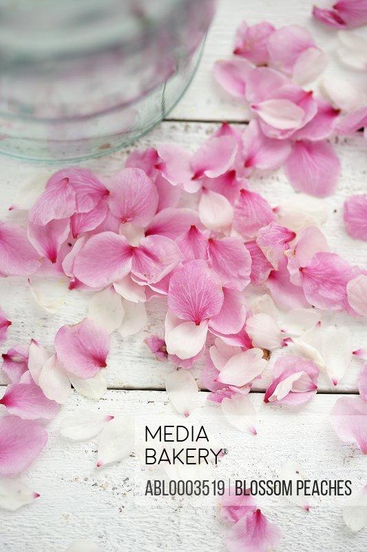 Scattered Pink Petals