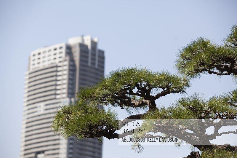 Conifer Tree and Skyscraper