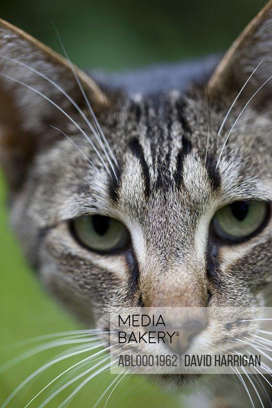 Close up of a pet cat