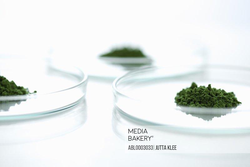 Petri Dishes with Wheatgrass Powder