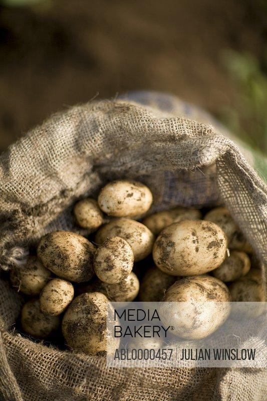Close up of sac of new potatoes