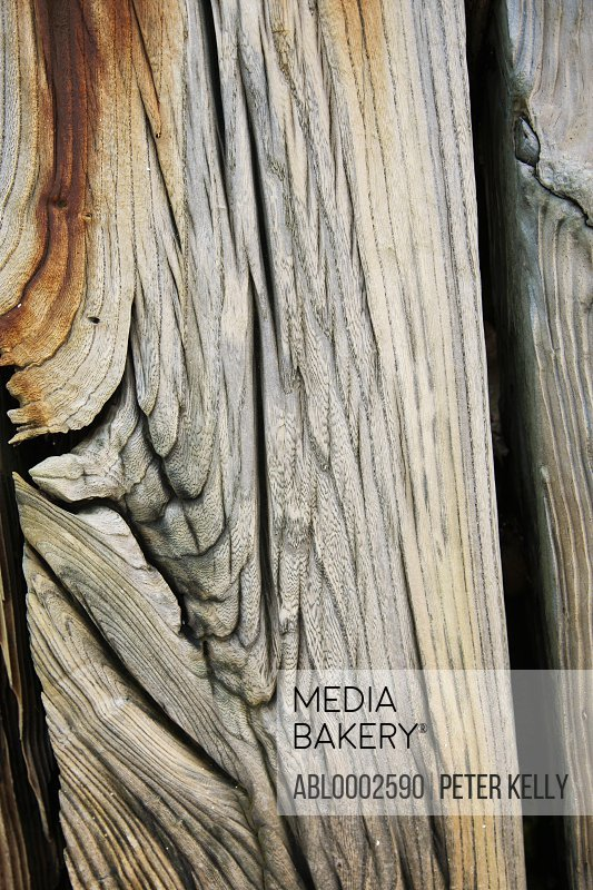 Rusting Wood Surface