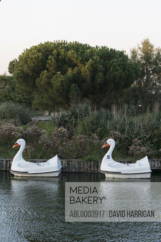 Swan Boats Mooring on Lake