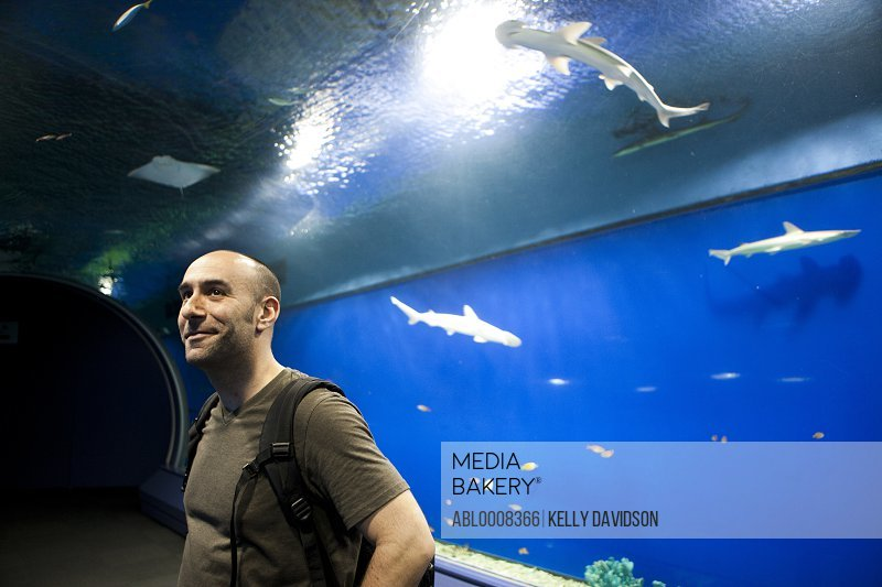 Man in Aquarium Looking  at Hammerhead Sharks