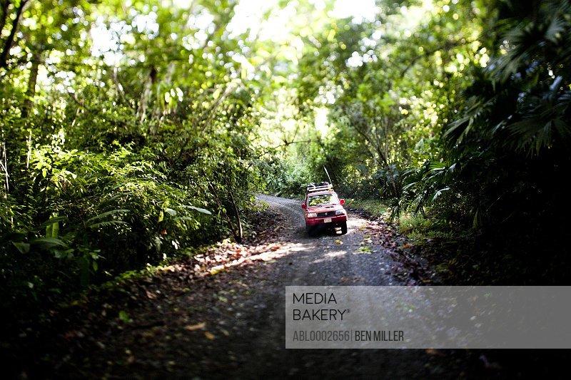 Taxi Driving Through Jungle