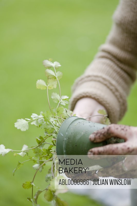 Close up of young woman's hands with flowerpot