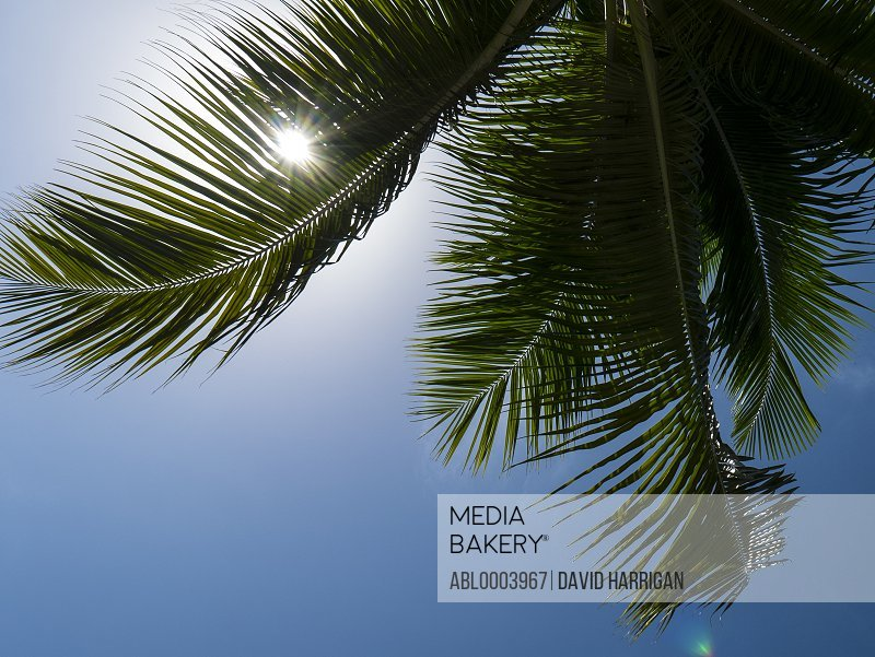 Palm Tree Frond against Blue Sky