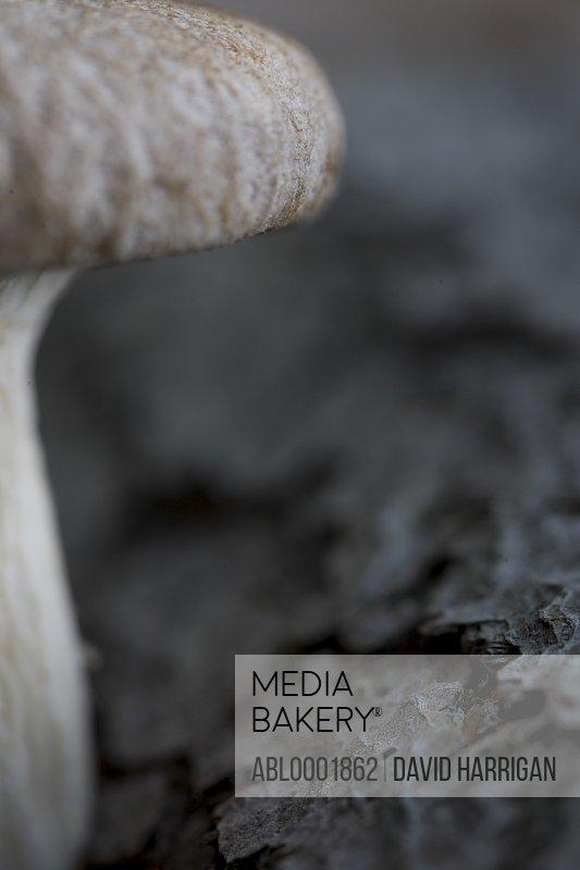 Extreme close up of an eryngi mushroom