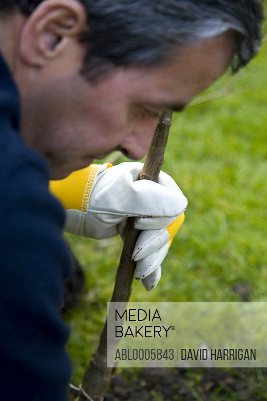 Close up of a man planting a tree