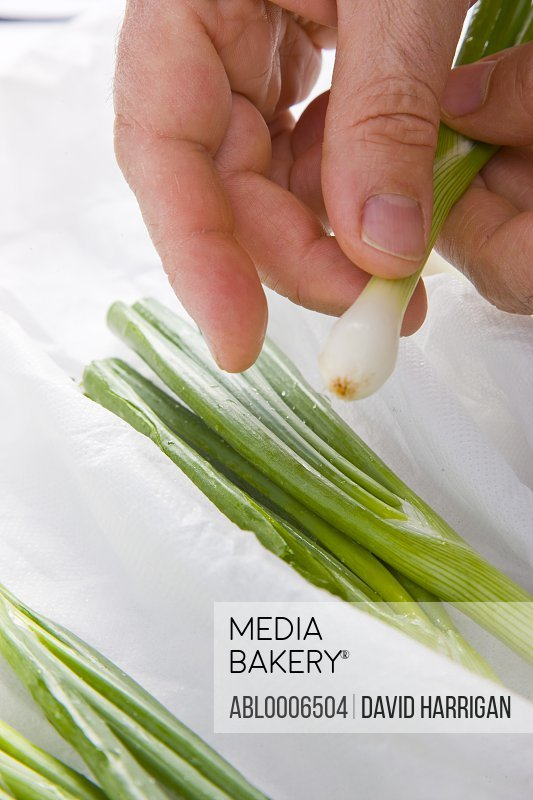 Man's Hands Holding Spring Onions