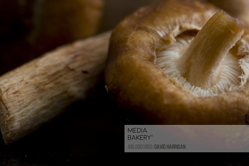 Extreme close up of shiitake mushrooms