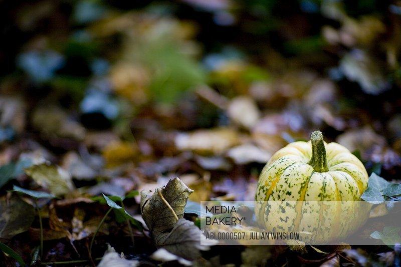 Close up of yellow pumpkin on ground
