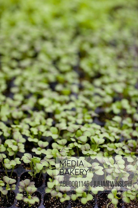 Extreme close up of seedling