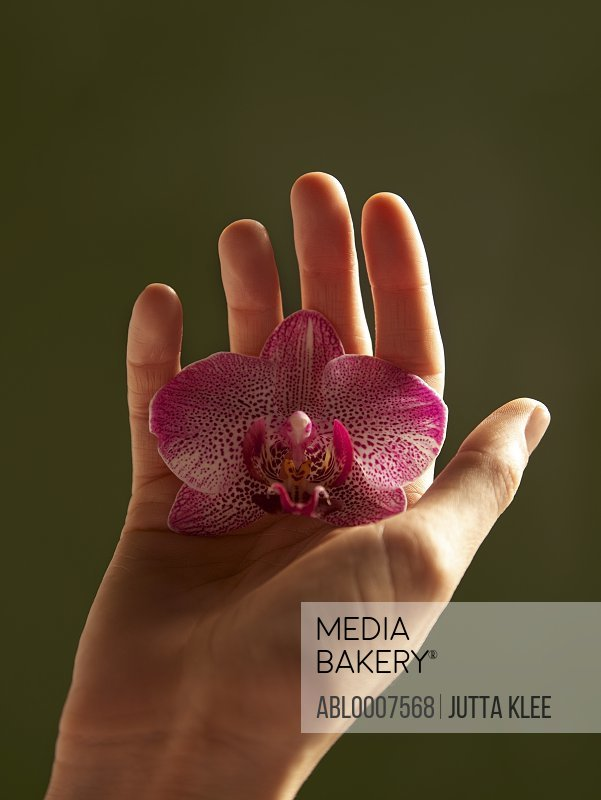 Woman's Hand Holding Pink Orchid Flower Head