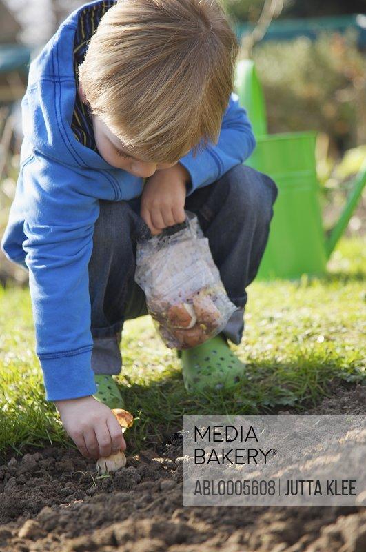 Young boy planting a flower bulb