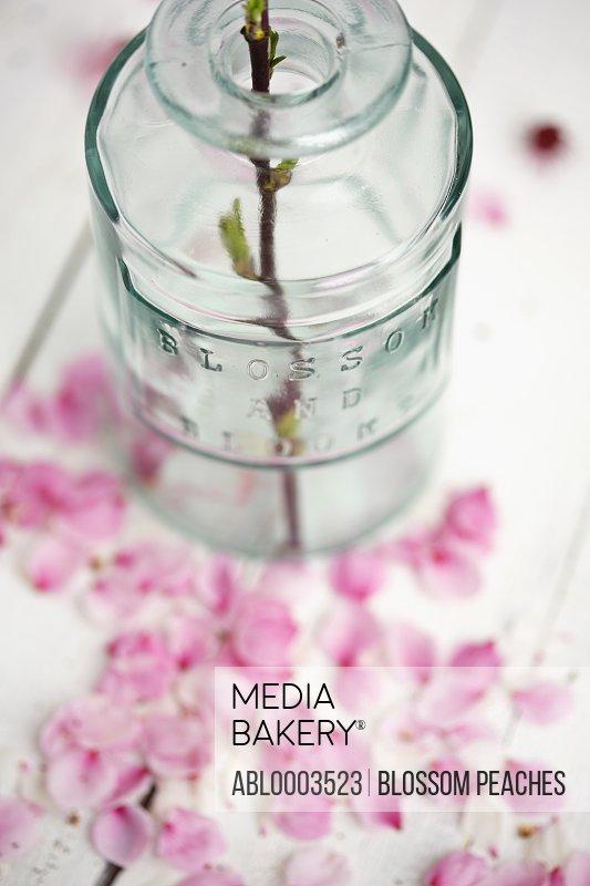 Vase and Scattered Pink Petals