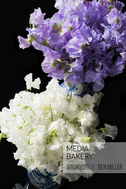 Bouquets of White and Purple Flowers