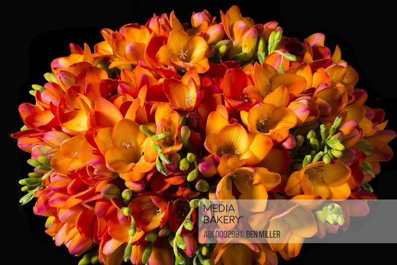 Close up of Orange Freesias Bouquet