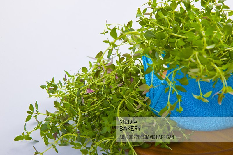 Thyme Wrapped in Bright Blue Cloth Napkin