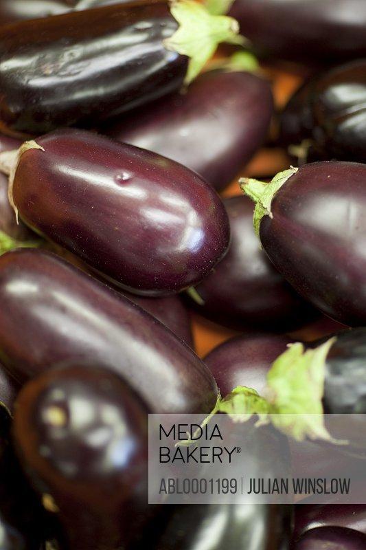 Aubergines - Solanum melongena