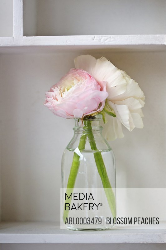 Glass Vase with Persian Buttercup Flowers, Close-up View