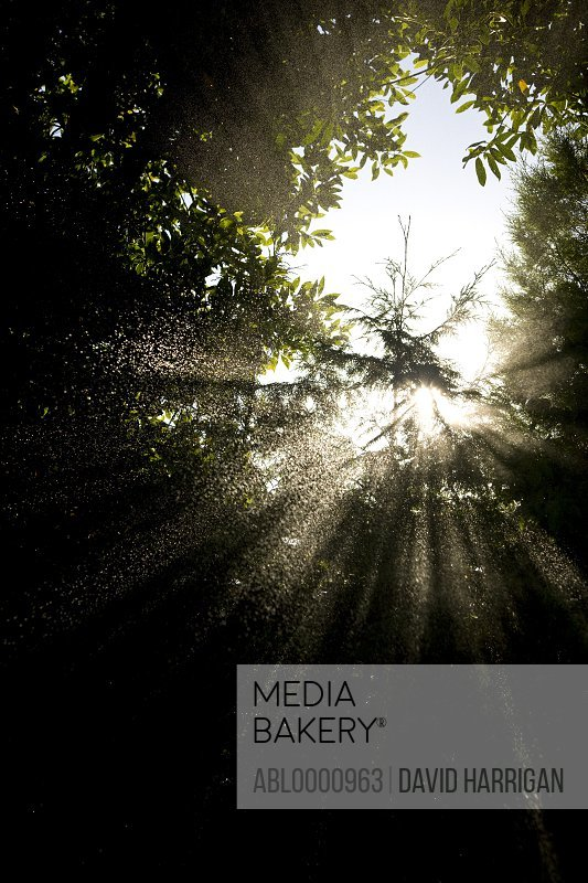 Sun rays and rain spraying over trees - low angle