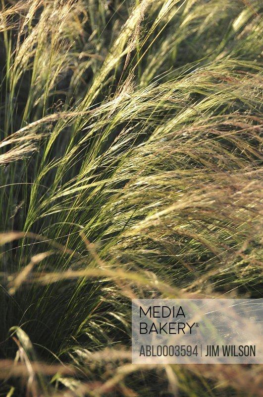 Meadow Grass, Full Frame