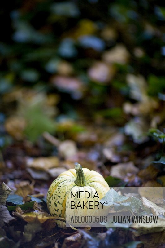 Close up of yellow pumpkin on ground