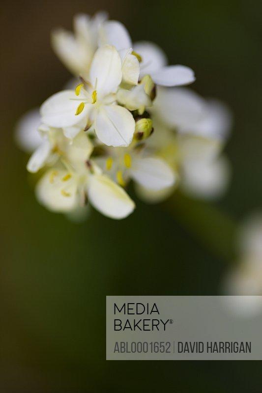 Extreme close up of a sycamore blossom