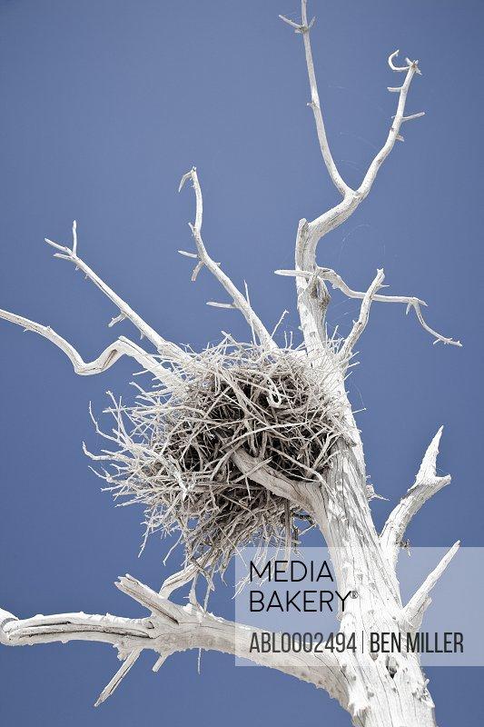 Lifeless Tree with Nest against Blue Sky
