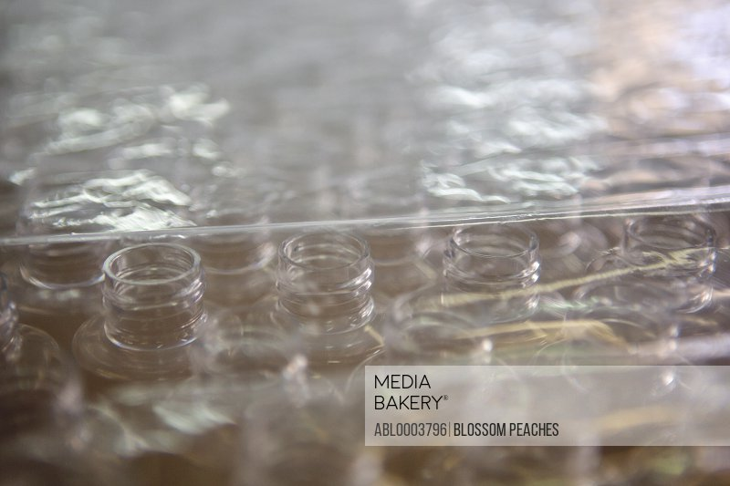 Rows of Transparent Bottles Covered with Plastic Wrap, Full Frame