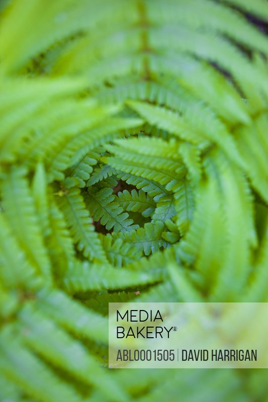 Extreme close up of fern leaves