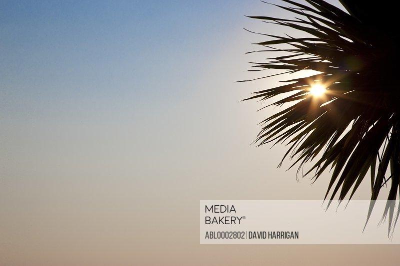 Sunbeams Shining through Palm Tree