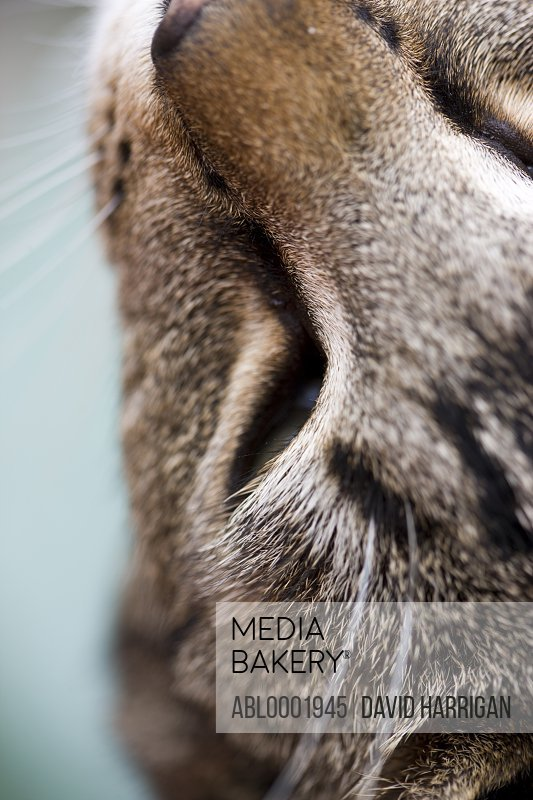 Close up of a pet cat, elevated view