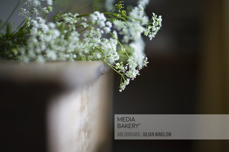 Cow parsley flowers  on rustic table
