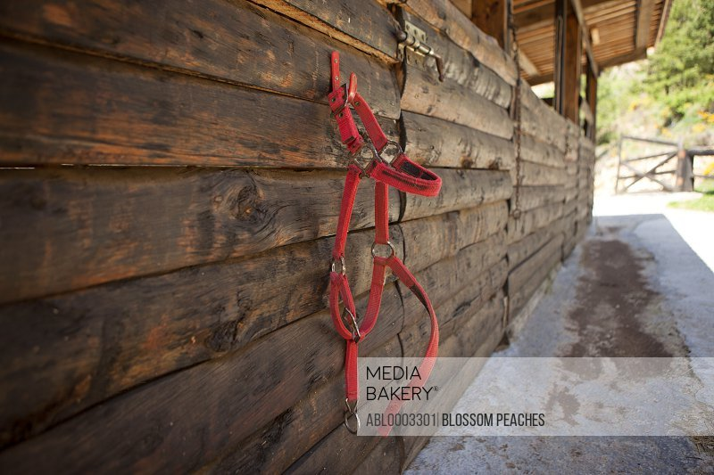 Exterior Wall of Stable with Horse Halter