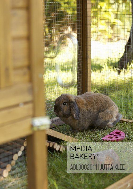 Rabbit in his Hutch