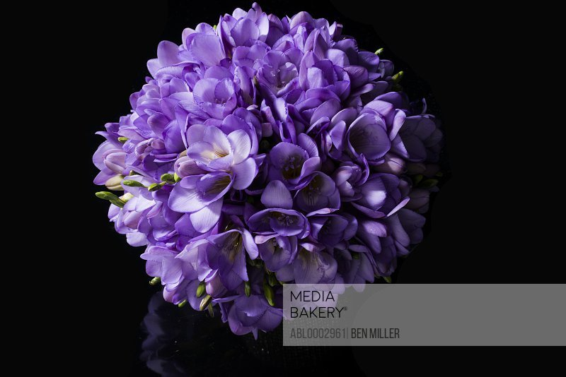 Close up of Purple Freesias Bouquet