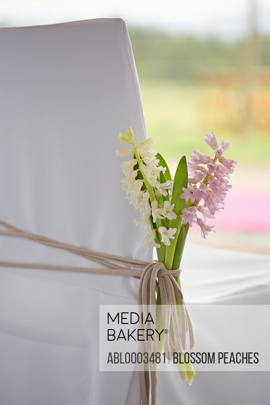 Hyacinths Tied around Chair, Close-up View