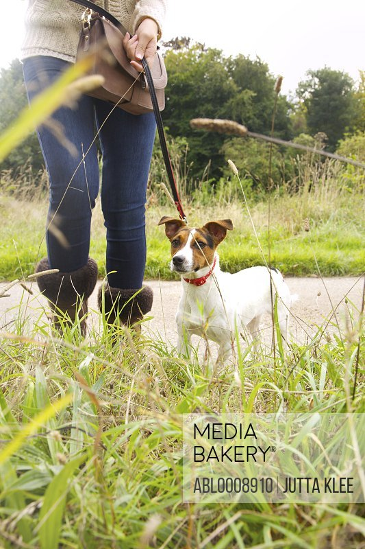 Jack Russell Dog on Leash and Woman's Legs