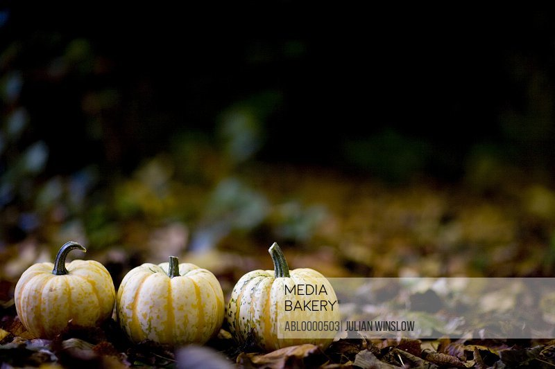 Three yellow pumpkins on ground